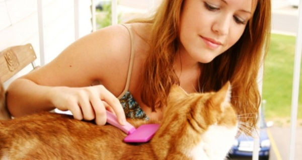 cara merawat kucing untuk pemula